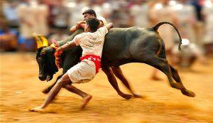 bull-online-marketing-running-speed-strong-powerfull